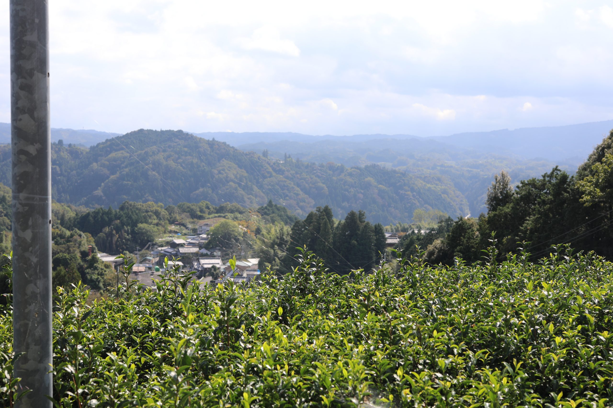 Tsukigase Kenkō Chaen -temark i Nara | økologisk landbrug